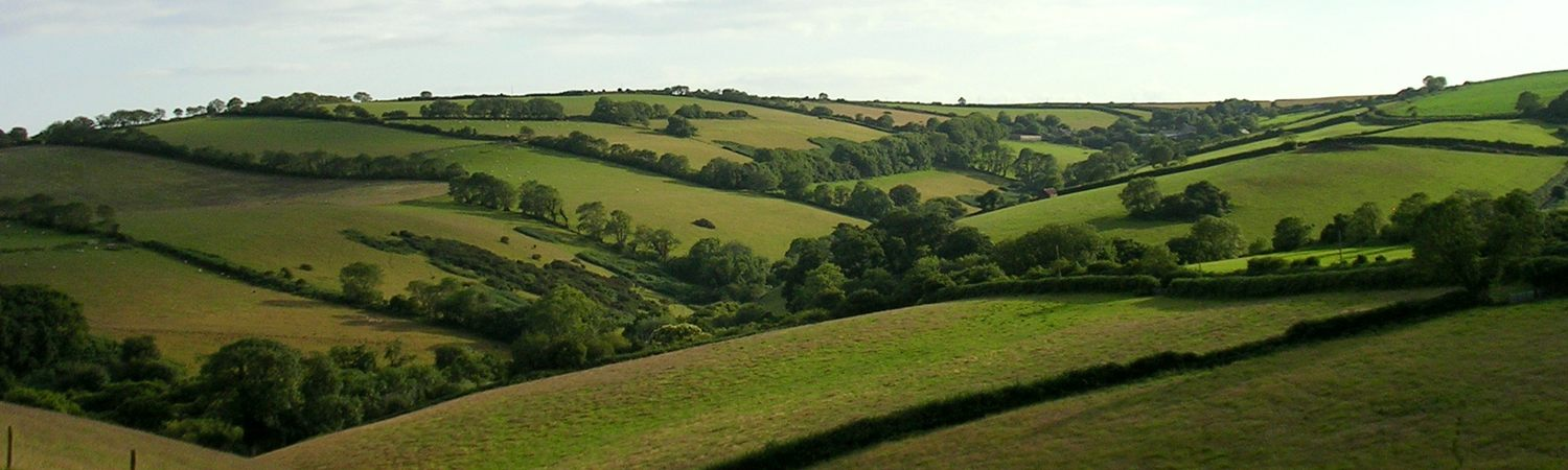 Slapton Countryside